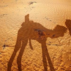 kamelskuggaw